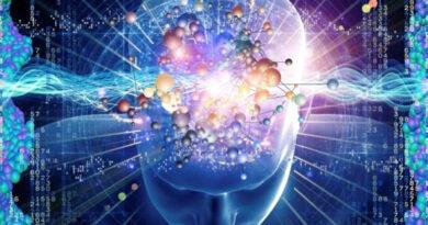 cerveau humain, cerveau, internet, information sur l''internet