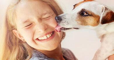 maladies de votre chien, maladies des animaux, les animaux et leurs maladies