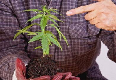 marijuana, cannabis, risque marijuana, risques fumer